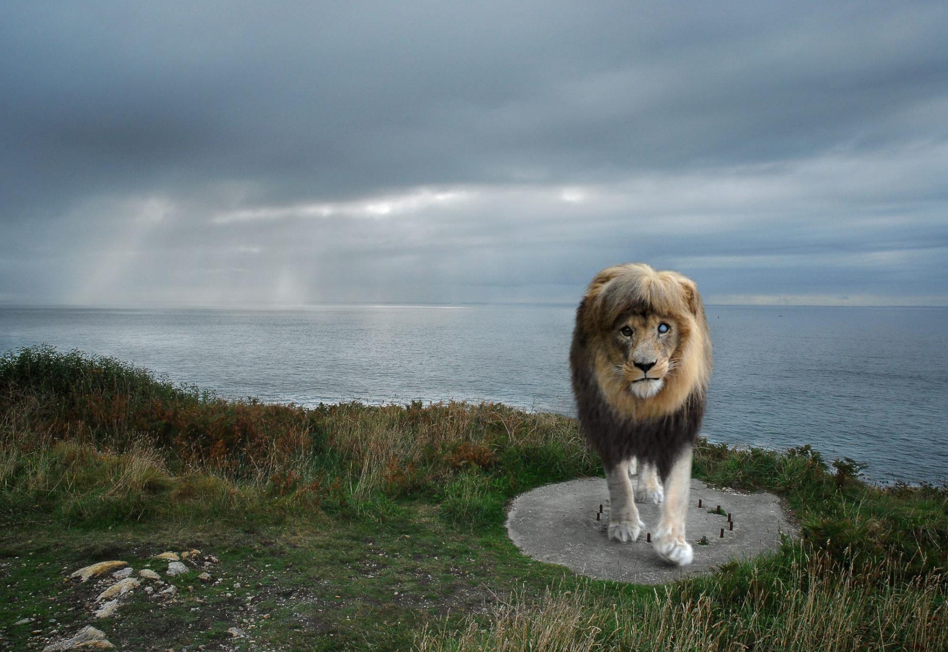 3-Lion Borgne
